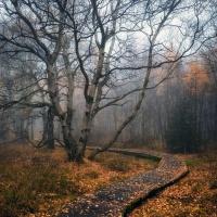 The Sound Of Nature - Pas De Deux